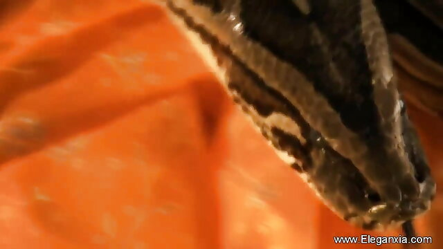 सुश्री सेक्सी मूवी के वीडियो पैंथर